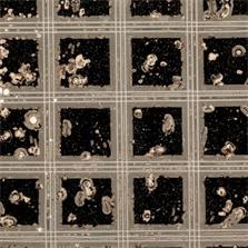 Pierre Cordier & Gundi Falk, Chimigramme 14/3/12 « Fenêtres sur l'Inconnu », 2012.